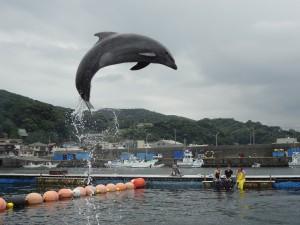 【日帰り】イルカと遊ぼう!スノーケリング&ダイブツアー